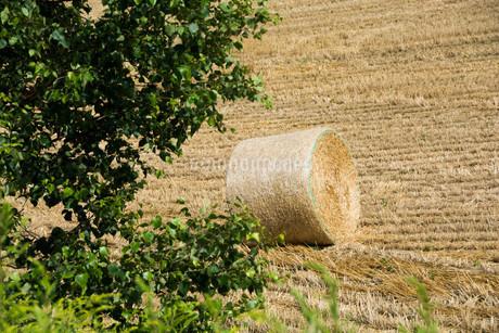 収穫が終わった麦畑とムギロールの写真素材 [FYI02896032]