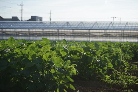 畑の写真素材 [FYI02898179]