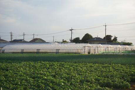 畑の写真素材 [FYI02898206]