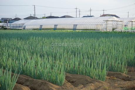 畑の写真素材 [FYI02898208]