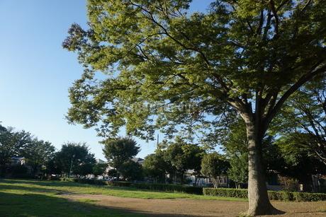 木と空の写真素材 [FYI02898384]