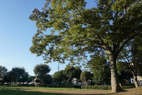 木と空の写真素材 [FYI02898389]