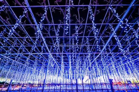 あしかがフラワーパーク クリスマスイルミネーションの写真素材 [FYI02904450]