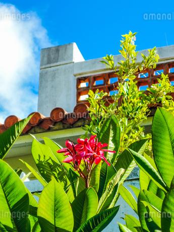 久米島の花と熱帯植物/久米島(沖縄県)の観光名所や絶景ポイントの写真素材 [FYI02910814]
