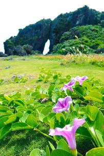 パワースポット「ミーフガー」に咲くピンクの花/久米島(沖縄県)の観光名所や絶景ポイントの写真素材 [FYI02910826]