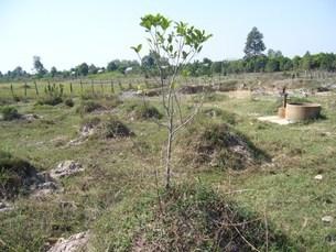 《カンボジア》地雷原を果実畑にの写真素材 [FYI02912860]