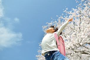 青空でジャンプする女の子(桜、ランドセル)の写真素材 [FYI02912938]