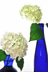 青い花瓶とボトルに入った2輪の紫陽花の写真素材 [FYI02914915]