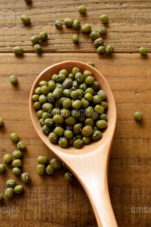 緑豆の写真素材 [FYI02914936]
