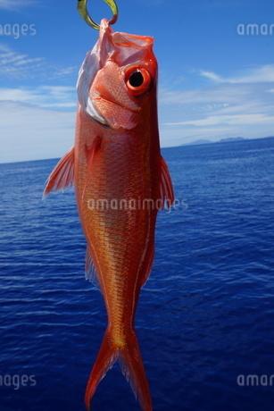 きれいな海とオナガの写真素材 [FYI02916106]