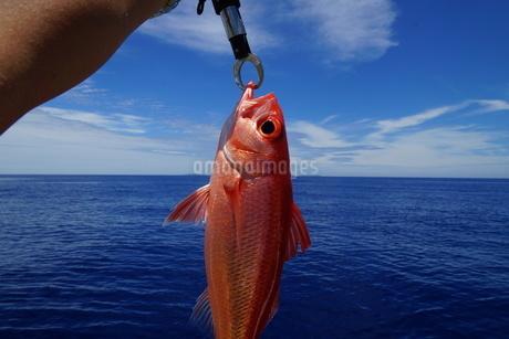 きれいな海とオナガの写真素材 [FYI02916149]