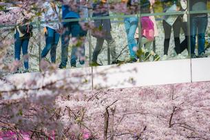 桜に包まれた橋と人々の足の写真素材 [FYI02917456]