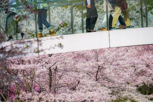 春の東京ミッドタウンと人々の足の写真素材 [FYI02917461]
