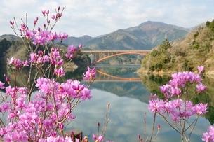 ミツバツツジ咲く宮ヶ瀬湖の写真素材 [FYI02919705]