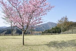 春の公園広場の写真素材 [FYI02919770]