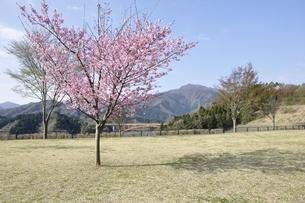 春の公園広場の写真素材 [FYI02919772]