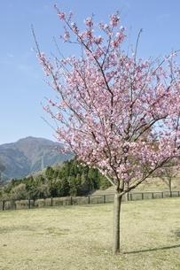 春の公園広場の写真素材 [FYI02919774]