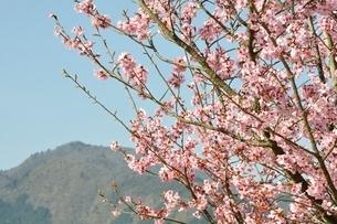 春の公園広場の写真素材 [FYI02919777]