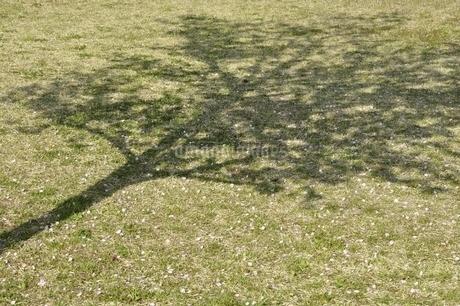 桜の花びらの写真素材 [FYI02919779]