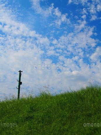 土手と電柱と青空の写真素材 [FYI02919851]