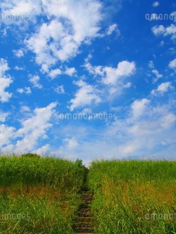青空に向かう階段の写真素材 [FYI02919854]