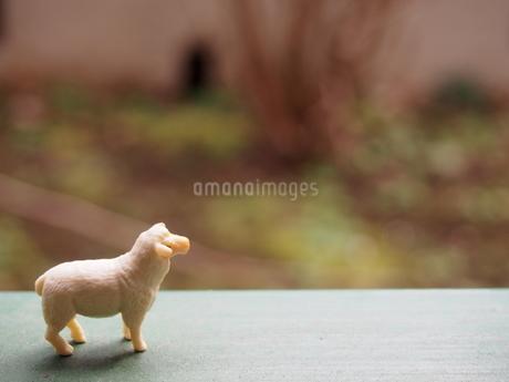 横から見た羊のミニチュアの写真素材 [FYI02919860]