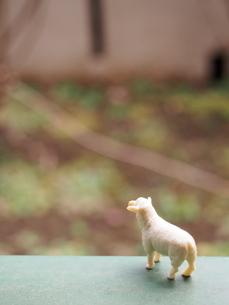 ミニチュアの羊の後ろ姿の写真素材 [FYI02919862]