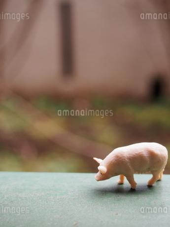 横から見た豚のミニチュアの写真素材 [FYI02919867]