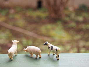 3匹の家畜の後ろ姿の写真素材 [FYI02919879]