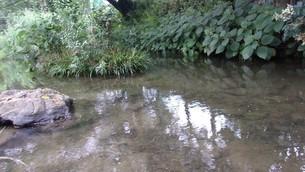 二ヶ領用水(川崎市)5の写真素材 [FYI02919956]
