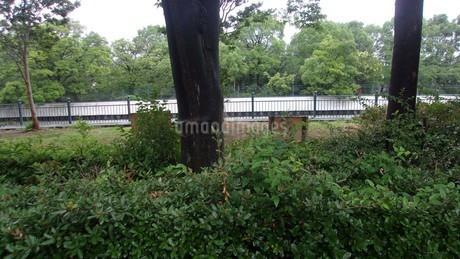 尼崎の緑地の写真素材 [FYI02919964]