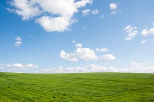緑の草原と青空の写真素材 [FYI02920022]