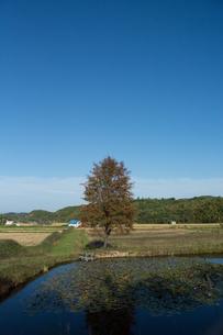 池の畔に立つナナカマドの写真素材 [FYI02920023]