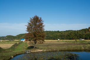 池の畔に立つナナカマドの写真素材 [FYI02920024]