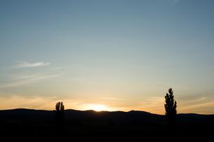 夕暮れの空と大きな木のシルエット 美瑛町の写真素材 [FYI02920030]