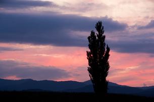 赤い夕焼け空とポプラの写真素材 [FYI02920036]
