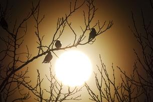 夕陽と小鳥の写真素材 [FYI02922108]