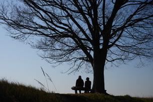 大木の下で語らう人の写真素材 [FYI02922110]