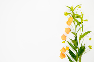 サンダーソニアの花束の写真素材 [FYI02922163]