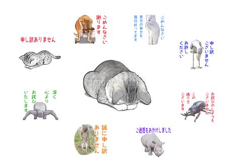 謝罪ネコと謝る動物達のイラスト素材 [FYI02922177]