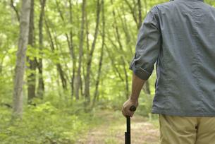 林の中で老人が杖を使ってリハビリの写真素材 [FYI02922372]