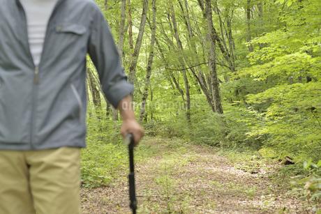 林の中で老人が杖を使ってリハビリの写真素材 [FYI02922373]