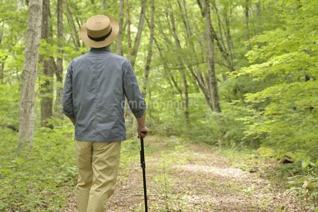 林の中で老人が杖を使ってリハビリの写真素材 [FYI02922380]