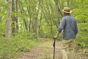 林の中で老人が杖を使ってリハビリの写真素材 [FYI02922383]
