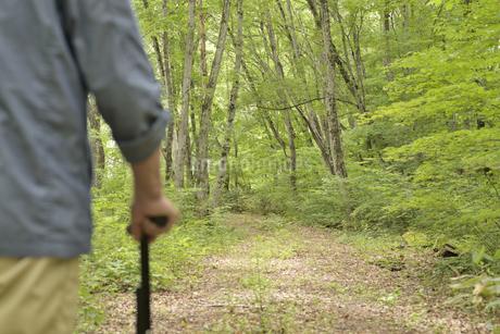 林の中で老人が杖を使ってリハビリの写真素材 [FYI02922386]