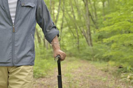 林の中で老人が杖を使ってリハビリの写真素材 [FYI02922389]