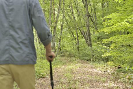 林の中で老人が杖を使ってリハビリの写真素材 [FYI02922393]