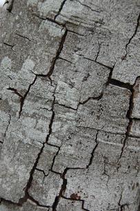 枯れた木の表面の写真素材 [FYI02922400]