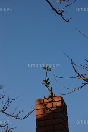 快晴の空に古いレンガの柱から伸びる植物の写真素材 [FYI02922402]