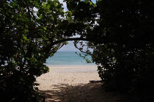南国沖縄の緑のトンネルの向こうにエメラルドグリーンの海の写真素材 [FYI02922408]